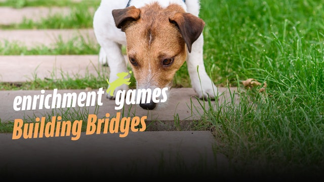 Enrichment:  Building Bridges