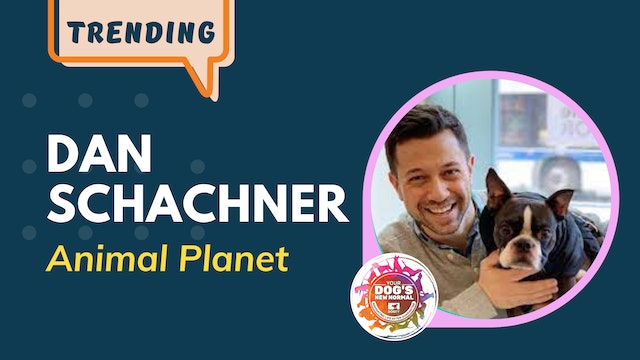 Dan Schachner on His Fostering Experience