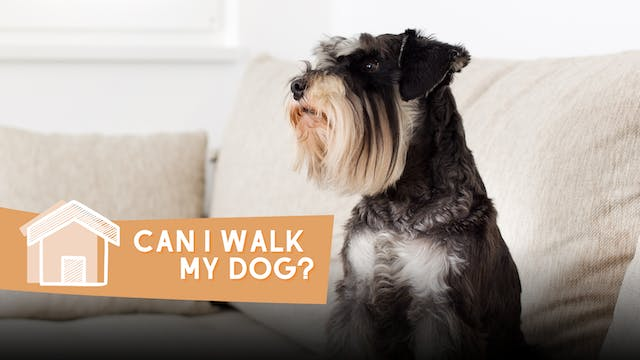 Can I walk my dog?