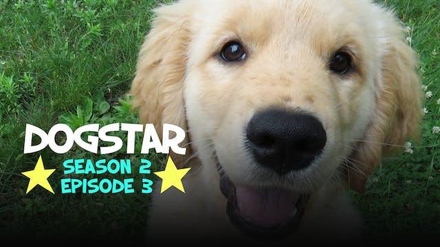 DOGSTAR Season 2 Episode 3