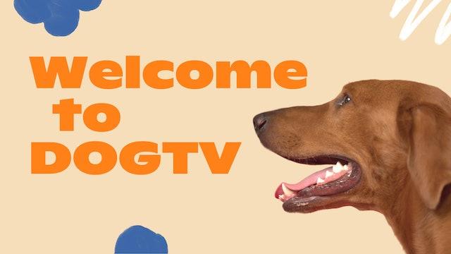 Welcome to DOGTV