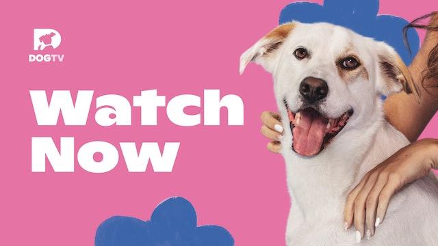 My DOGTV Channel
