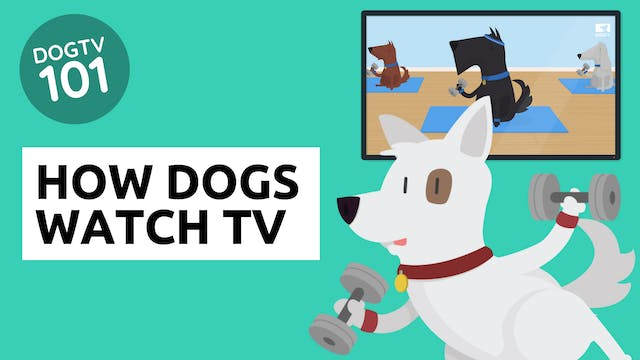 How Dogs Watch TV