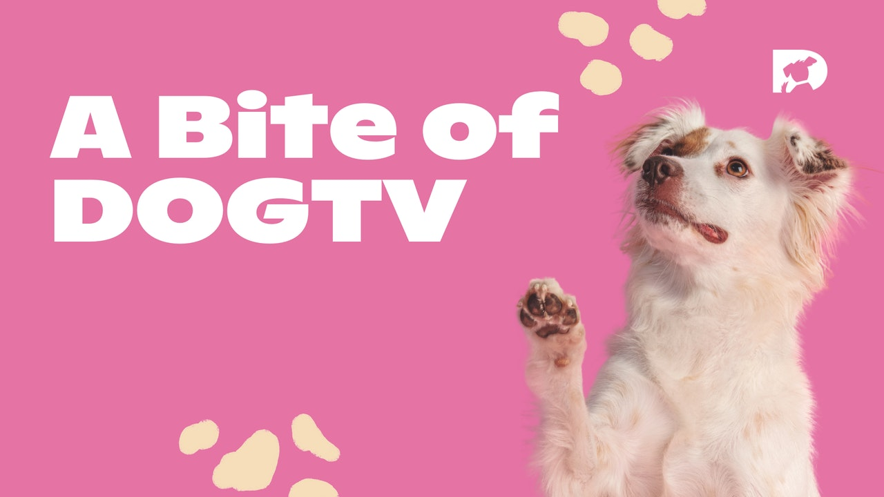 A Bite of DOGTV