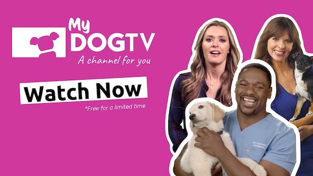 MyDOGTV Channel