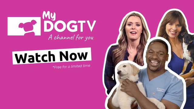 MyDOGTV Channel