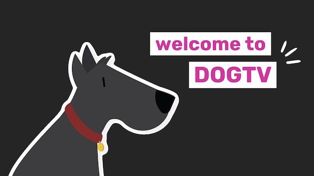 Welcome to DOGTV US