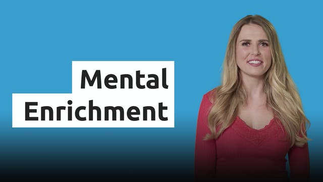 Mental Enrichment