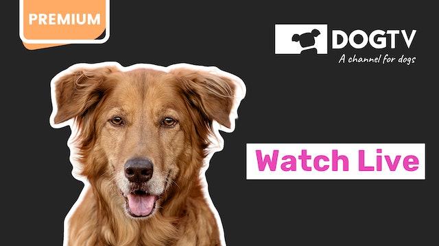 DOGTV live feed