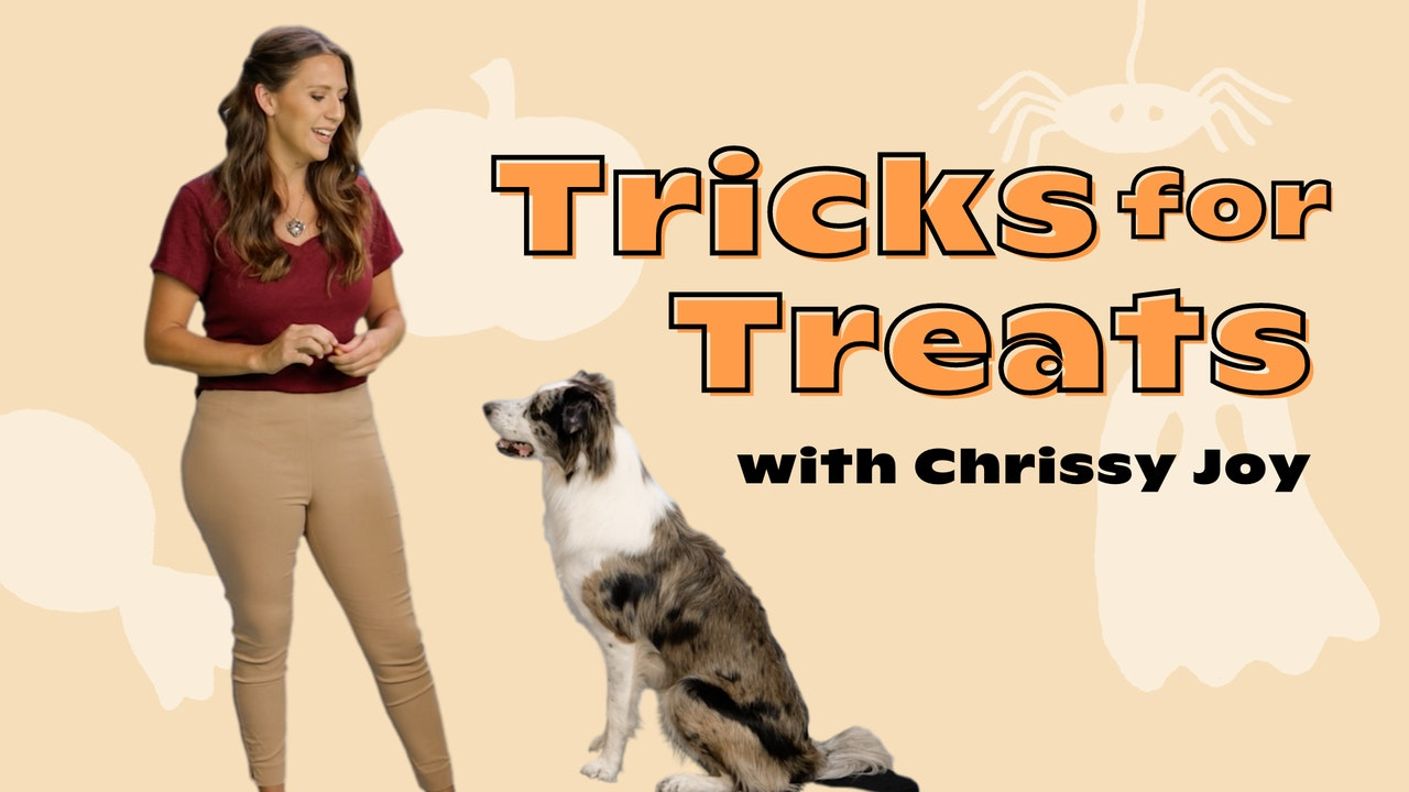 Tricks for Treats with Chrissy Joy