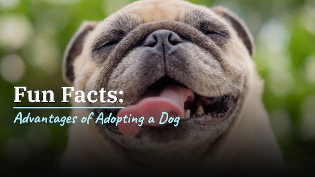 Advantages of Adopting a dog