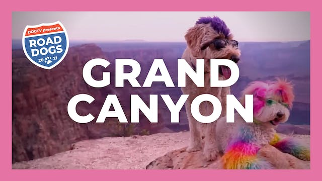 Road Dogs - Grand Canyon