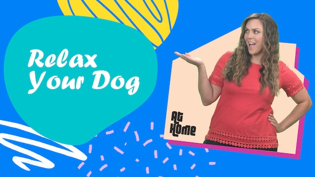 Relax Your Dog