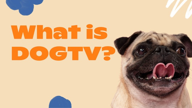 What is DOGTV?