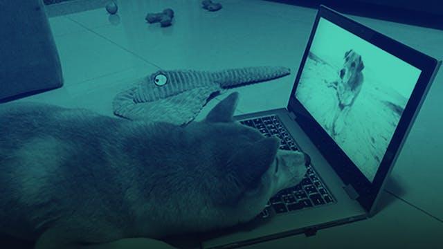 Dogs Watching DOGTV
