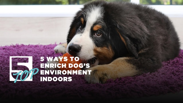 5 Ways to Enrich your dog's environmant