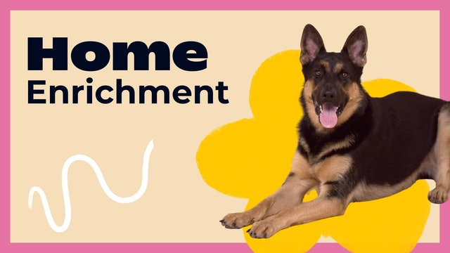 Home Enrichment