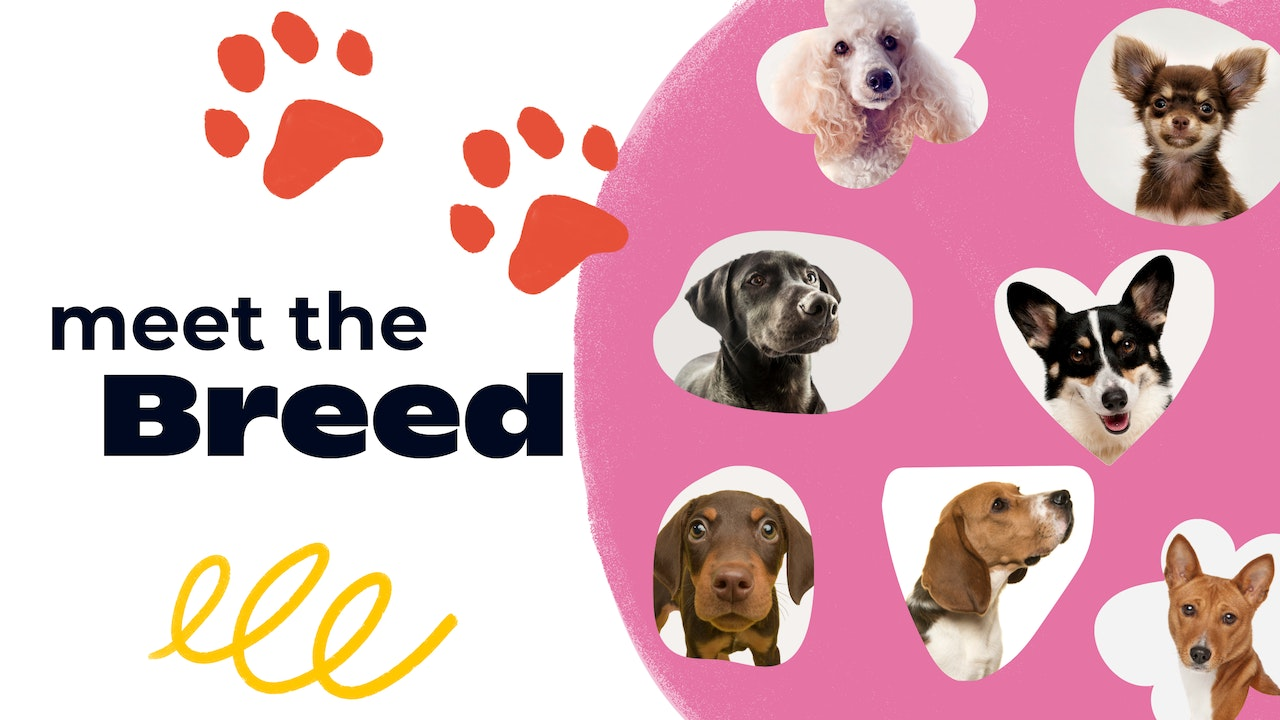 Meet the Breed