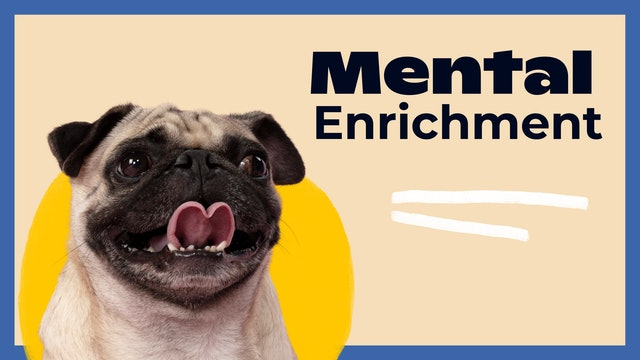 Mental Enrichment