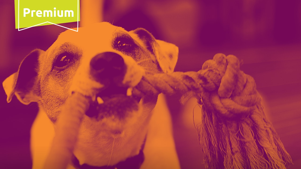 For Your Dog:  Stimulation On The Go
