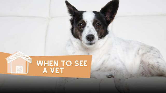 When to See a vet
