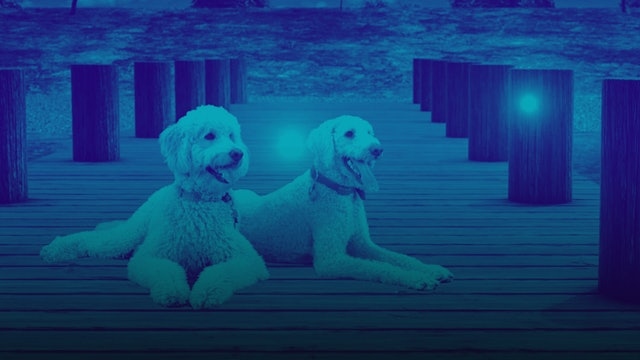 DOGTV Stimulation Sample