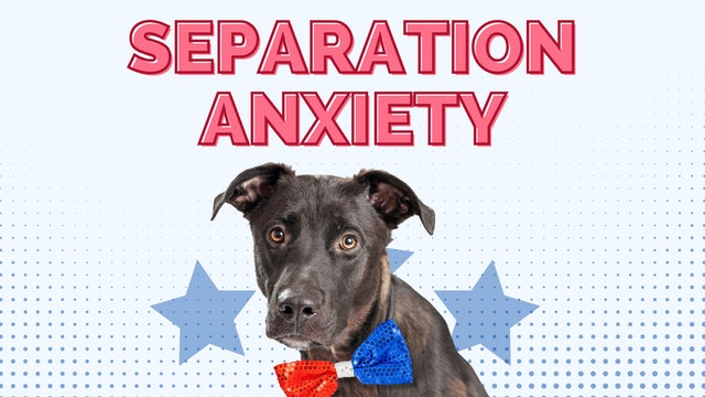 Your Dog's New Normal Panel Discussion: Separation Anxiety
