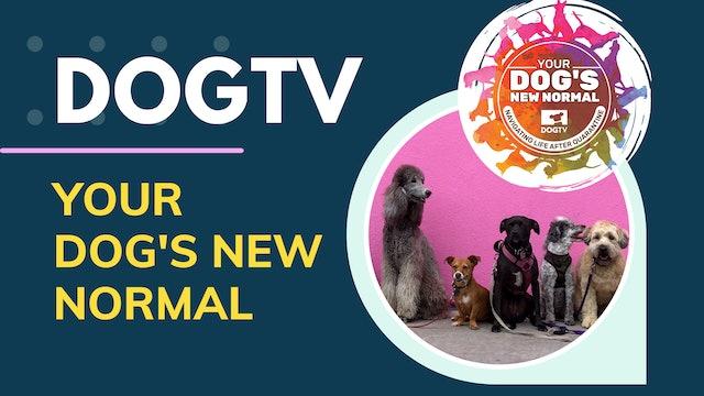 Your Dog's New Normal: Navigating Life After Quarantine