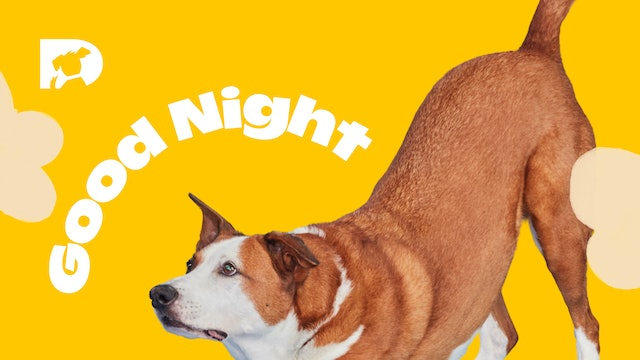 For Dogs: Good Night