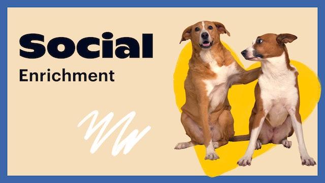 Social Enrichment