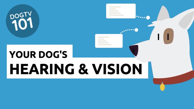 Your Dog's Hearing and Vision