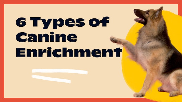 6 Types of Canine Enrichment