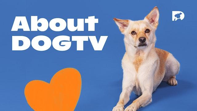 About DOGTV