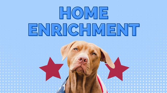 Your Dog's New Normal Panel Discussion: Home Enrichment