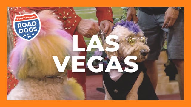 Road Dogs - Las Vegas