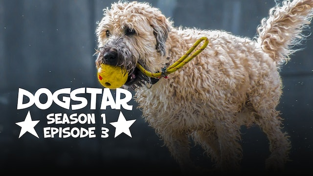 DOGSTAR Season 1 Episode 3