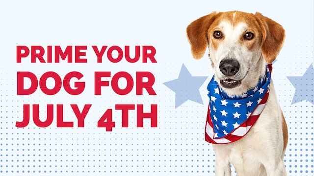 Prime Your Dog for July 4th