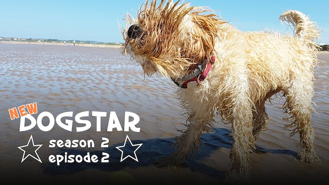 DOGSTAR Season 2 Episode 2