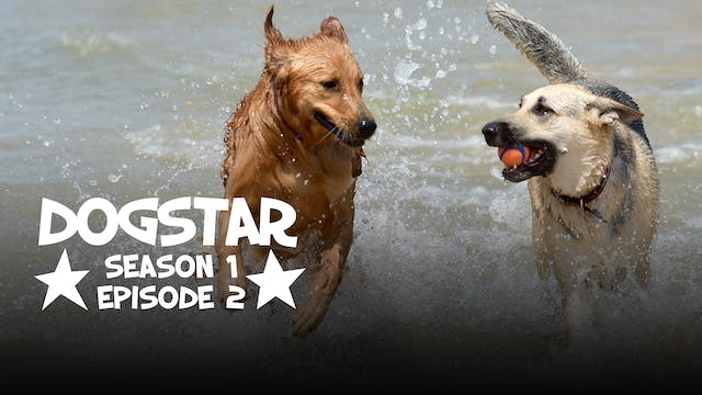 DOGSTAR Season 1 Episode 2