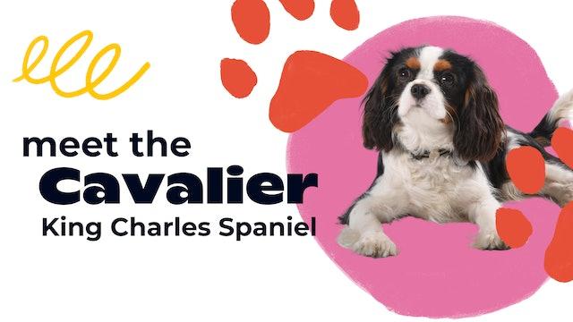 Meet the Cavalier