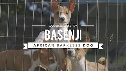 Dogumentary TV Video