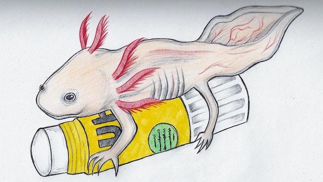 Death of an Axolotl