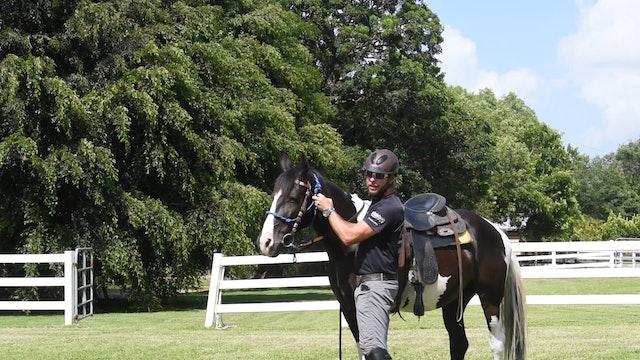 Building a partnership with our hearing impaired horse part 2