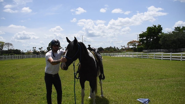 Working with a hearing impaired horse