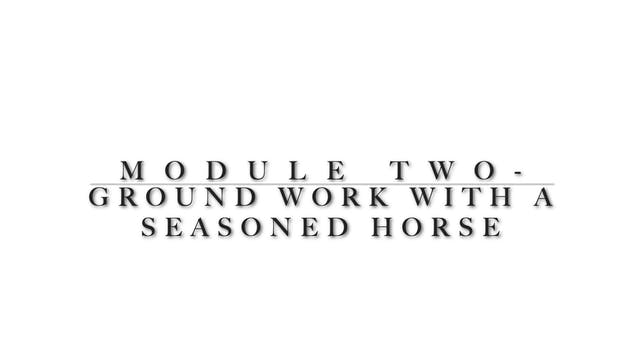 Module 2 - Ground work and its importance before we saddle - advanced horse