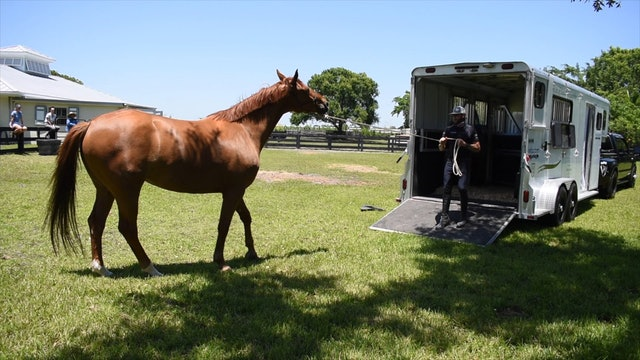 Trailer loading with a nervous horse part 2