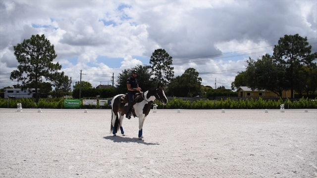 Transferring ground work to under saddle with Sierra