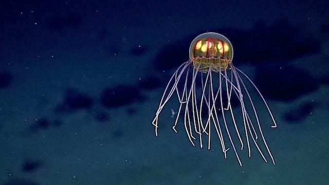 8 Strange New Deep Sea Creatures