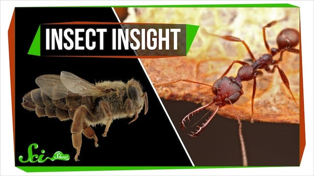 Insect Insight | A New Secret Ingredi...