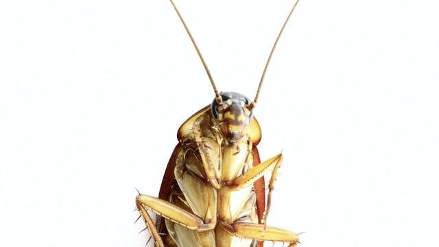 Cockroaches, Alligators & Other Weird...